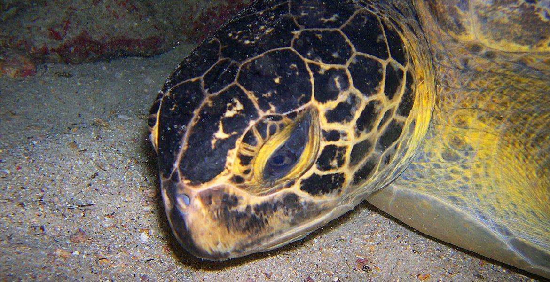 Desove de tortugas