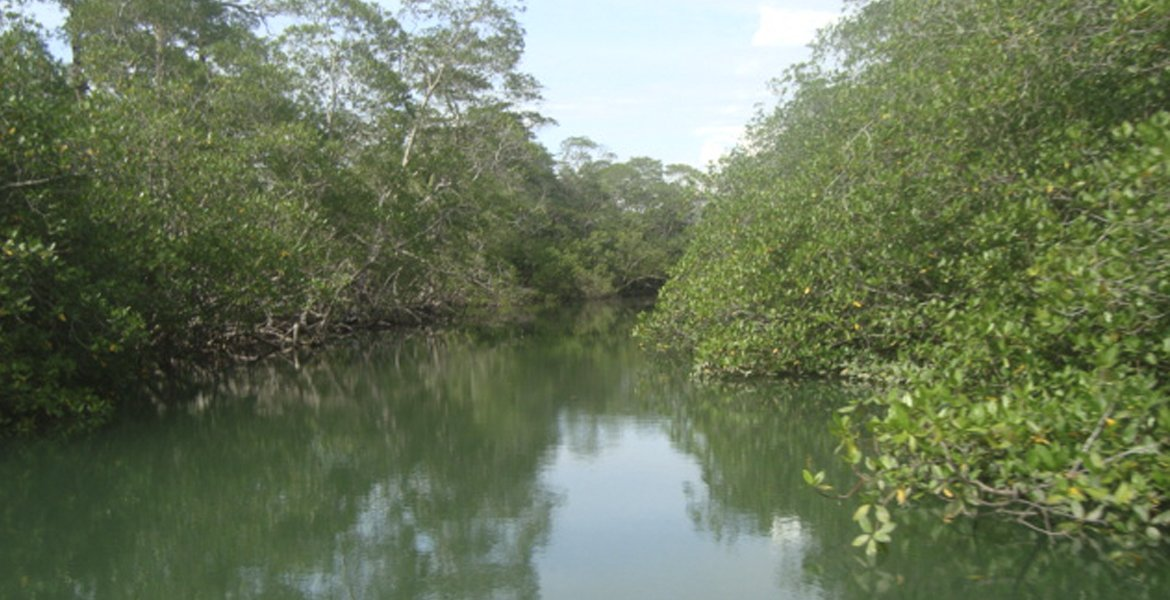 Mangroves Exploration