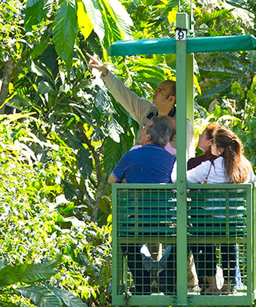 Rainforest Aerial Tram & Ecological Exhibitions