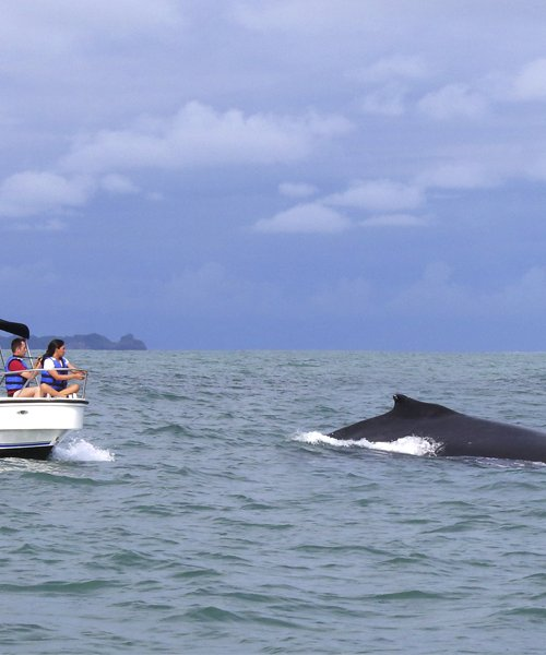 Whale Watching tour in Pedasi