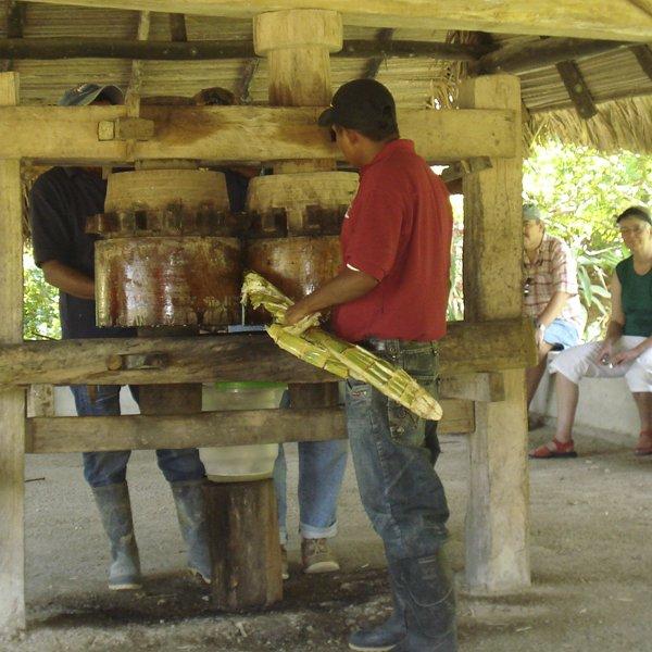 AgroTour Hato Viejo & Tobacco