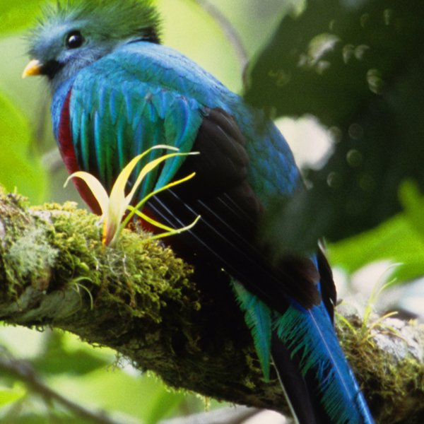 Los Quetzales birdwatching trail