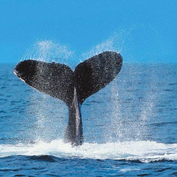 Whale watching tour in Boca Chica